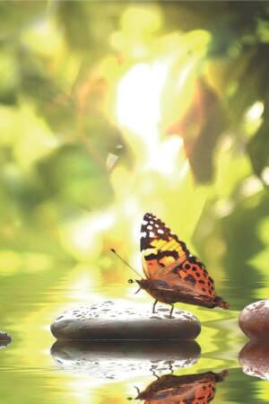 Spiritualiteit & gezondheid